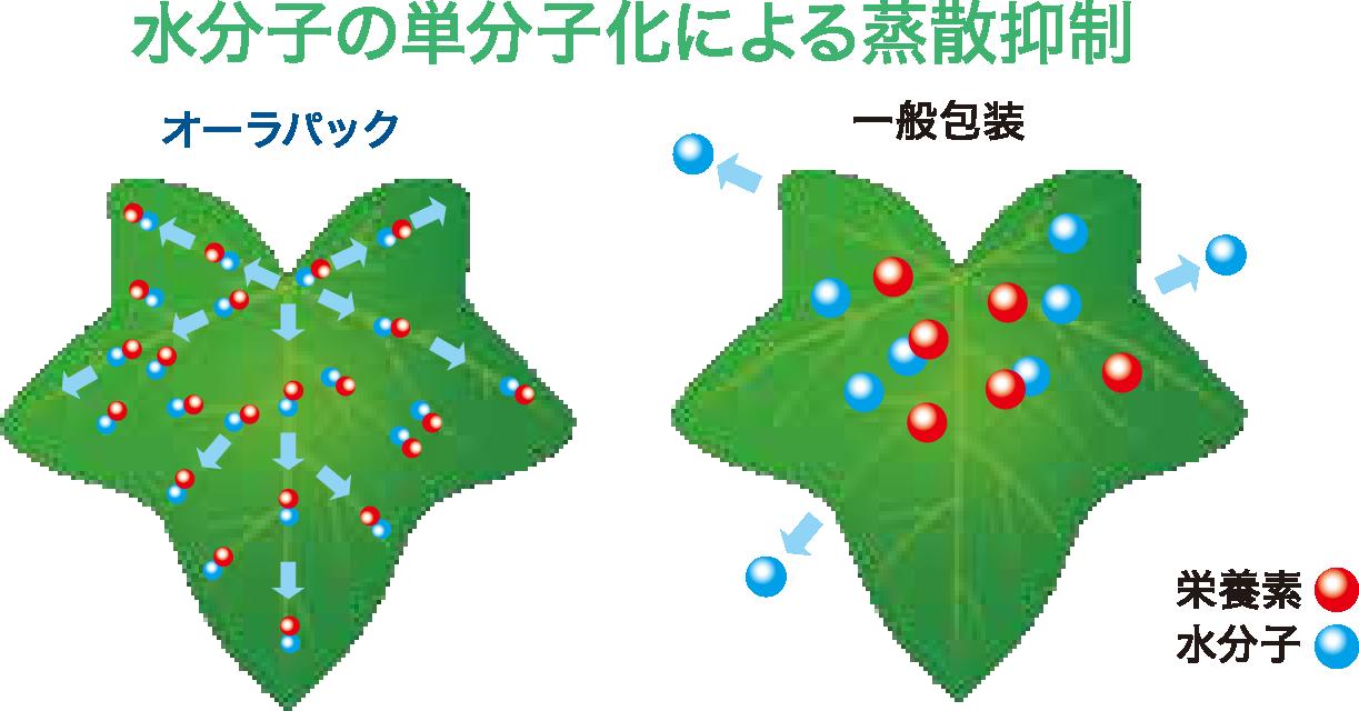水分子活性機能